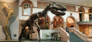 header_Tyrannosaurus-Rex